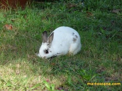 Pain perdu a l italienne et photos d une petite lapine - Autrefois utile pour faire chauffer un lit ...